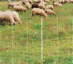 siatki-dla-drobiu-i-owiec